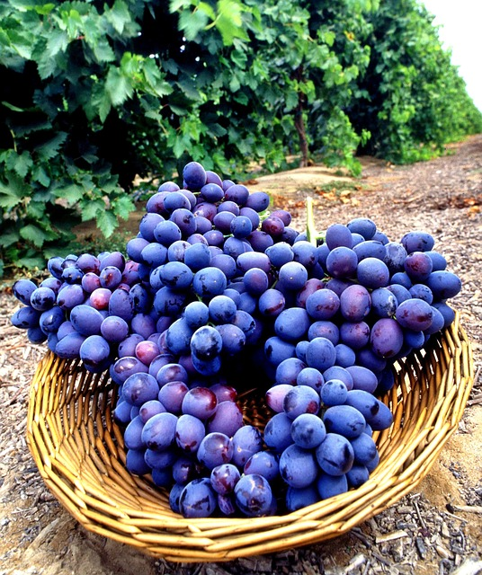 seedless-grapes-139645_640