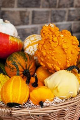 thanksgiving gourds